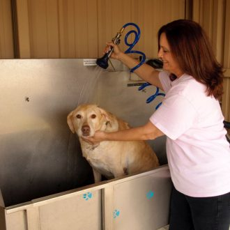All Star RV Resort Dog Wash