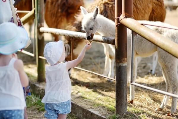 Best Texas Zoos | Animal Exploration